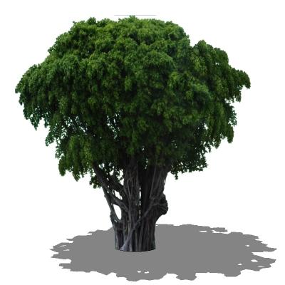 Banyan tree 3D Model - FormFonts 3D Models & Textures
