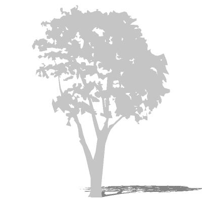 Tree Silhouette 02 3d Model Formfonts 3d Models Amp Textures