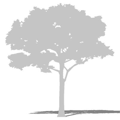 Tree Silhouette 12 3d Model Formfonts 3d Models Amp Textures