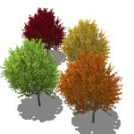 A selection of generic trees in varying foliage, s...