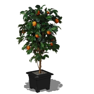 Orange Tree 3d Model Formfonts 3d Models Amp Textures