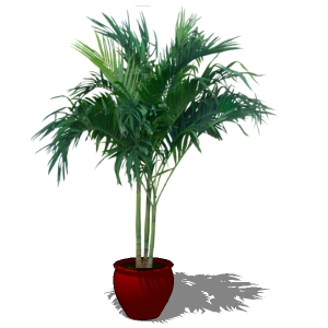 Areca palm 3D Model - FormFonts 3D Models & Textures