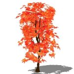 View Larger Image of Red Maple
