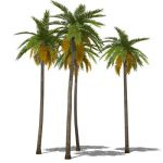 4 new low-poly palms with slight variations in hei...