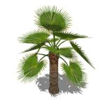 View Larger Image of Young Palms