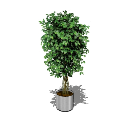 Potted Ficus 3d Model Formfonts 3d Models Amp Textures