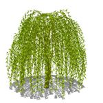 4 variations of a weeping willow (Salix babylonica...