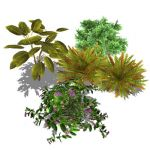A selection of 4 small generic shrubs. Low-poly sk...