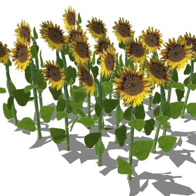 Sunflowers 3D Model - FormFonts 3D Models & Textures