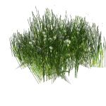A variety of grass clumps; approx 2ft (0.6m) squar...