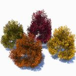 4 generic, colourful bushes.