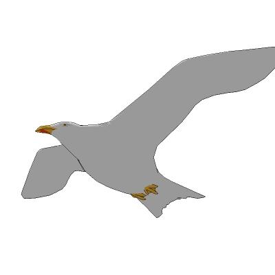Seagull 3d Model Formfonts 3d Models Amp Textures