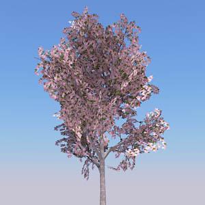 Cherry Tree 3d Model Formfonts 3d Models Amp Textures