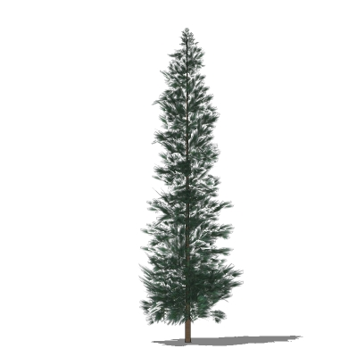 3D Polygonal Textured Model of a Pine Tree