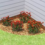 A selection of 4 billboard rose bushes