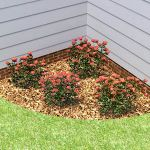 A selection of 4 bilboard rose bushes