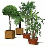 HQ plants are 2D billboards in a 3D pot (in order ...