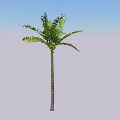 King Palm 3D Model - FormFonts 3D Models & Textures