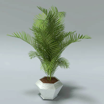 Potted Areca Palms 3d Model Formfonts 3d Models Amp Textures