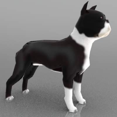 Boston Terrier 3d Model Formfonts 3d Models Amp Textures
