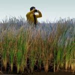 Salmeadow Corgrass (Spartina patens). Small block ...