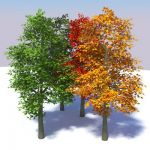 Geometrees are exactly that�plants 