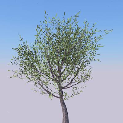 Geometree Olive 3D Model - FormFonts 3D Models & Textures