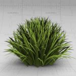 Generic clump of grass/border shrubbery. Approx. 1...