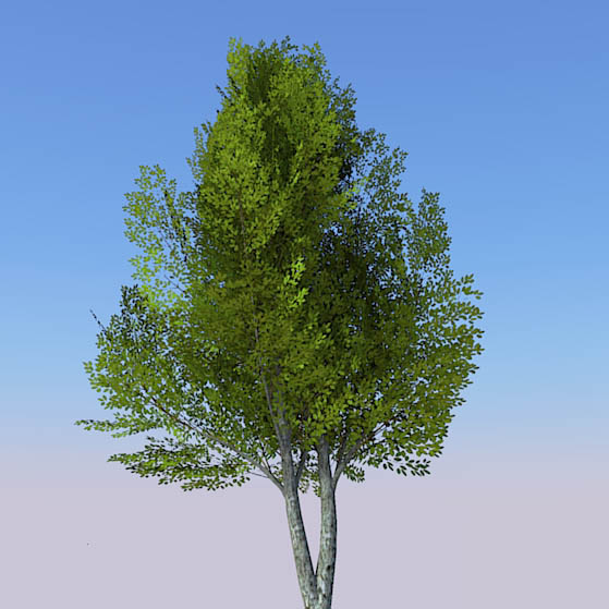 Generic tree with seasonal variations..