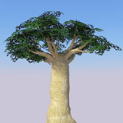 Baobabs 3d Model Formfonts 3d Models Amp Textures