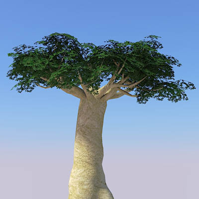 Baobabs 3D Model - FormFonts 3D Models & Textures