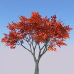 Small generic tree (9-10ft) with four seasonal var...