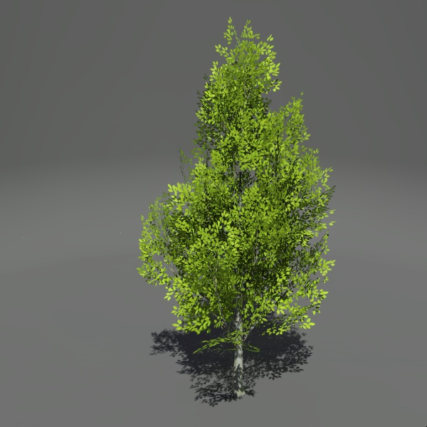Generic 30ft tree in seasonal foliage.