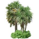 Small group comprising Chusan palm (trachycarpus f...
