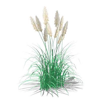 pampas grass 3d model formfonts 3d models textures. Black Bedroom Furniture Sets. Home Design Ideas