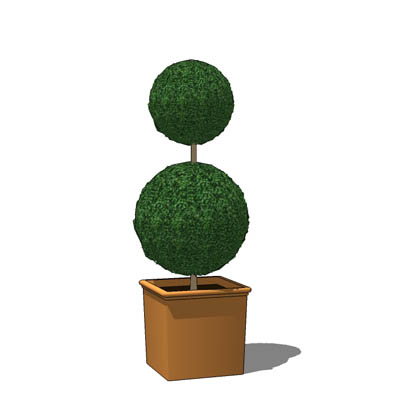 A selection of small box topiary.
