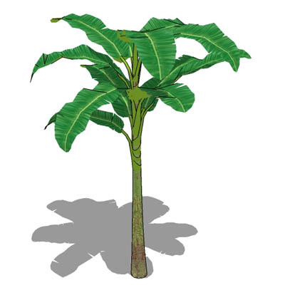 Banana Plant 3D Model - FormFonts 3D Models & Textures