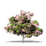 View Larger Image of 1_dogwood_pink.jpg