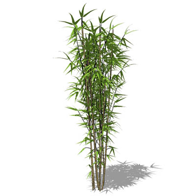 Bamboo 3d Model Formfonts 3d Models Amp Textures