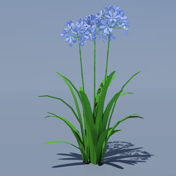 Agapanthus orientalis or Nile Lily.
