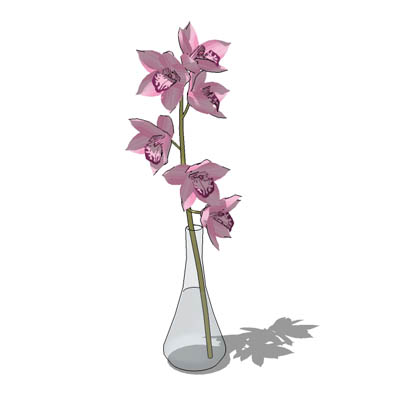 An orchid in a vase.