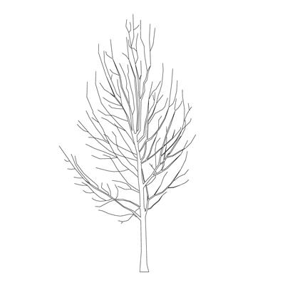 Winter Tree 3d Model Formfonts 3d Models Amp Textures