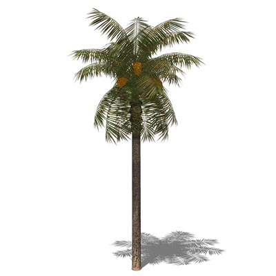 Palm Tree 3d Model Free Download