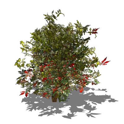 Very Low poly generic shrub. Approx. 4ft / 1.2m hi....