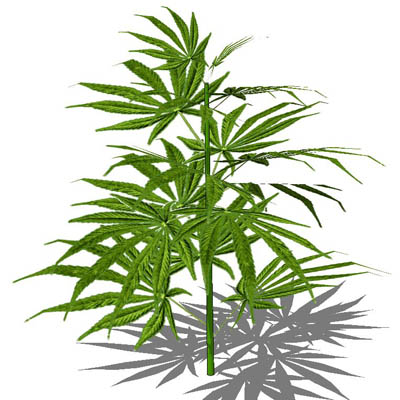marijuana growing guide pdf download