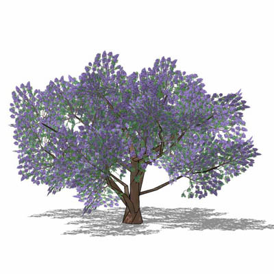 Jacaranda 3D Model - FormFonts 3D Models & Textures