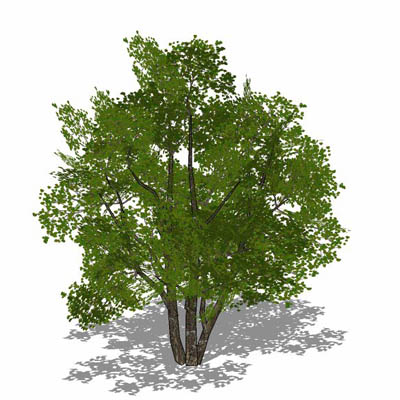 Generic deciduous tree in 4 variations, including ....