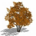 Generic deciduous tree in 4 variations, including ...