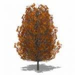Generic deciduous tree in Autumn colours with tran...