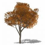 Generic Elm-type tree. High branch clearance, suit...